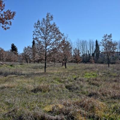 Prodaju se tri građevinska zemljišta u okolici Poreča